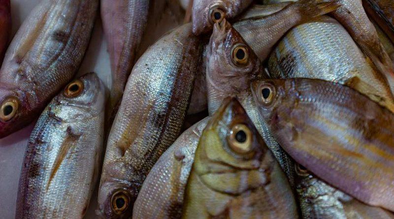 Świeże ryby – prawie jak żywe!